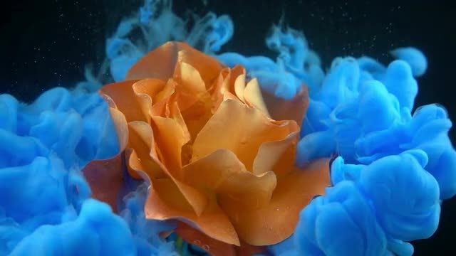 Blue Paint Surrounding Orange Flower: Stock Video