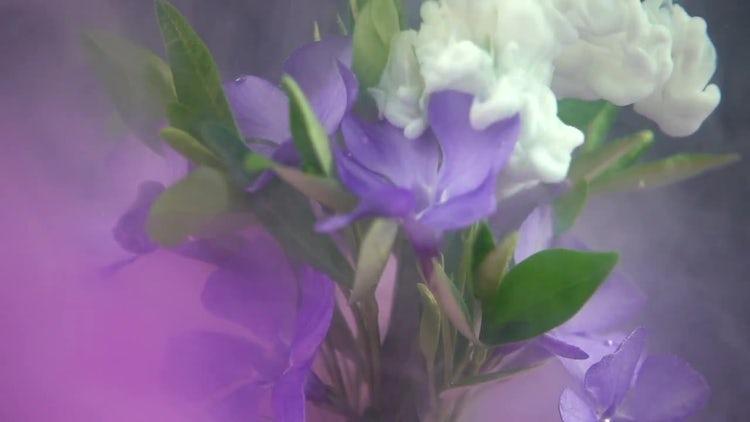 Liquid Paints Spreading On Flower: Stock Video