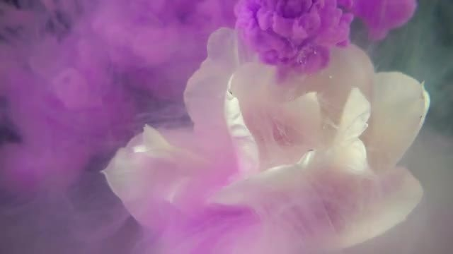 Purple Paint On White Flower: Stock Video