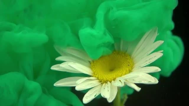 Green Paint On White Flower: Stock Video