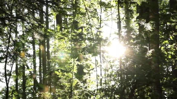 Sliding Forest Background: Stock Video