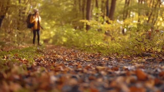 Tourist Girl Walking In Forest: Stock Video