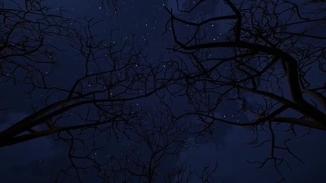 Moving Under Bare Trees at Night: Stock Motion Graphics