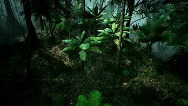 Flying Through The Green Jungle: Stock Motion Graphics