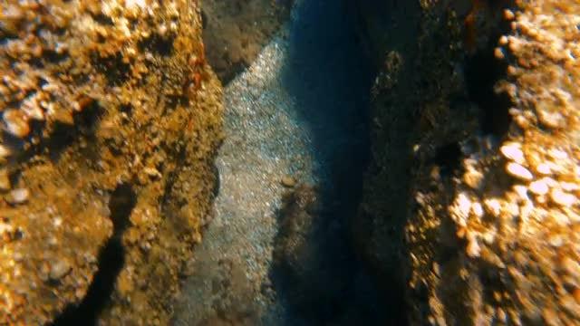Exploring The Bottom Of Sea: Stock Video