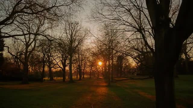 Hyde Park In London, UK: Stock Video