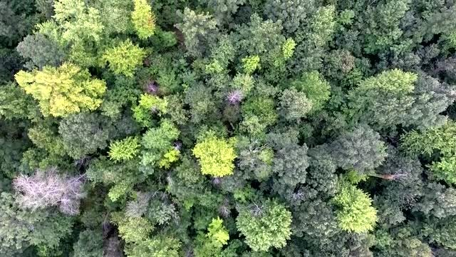 Aerial View Of Forest Trees: Stock Video