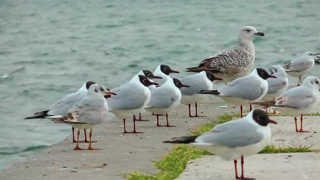 Seagulls On The Shoreline: Stock Video