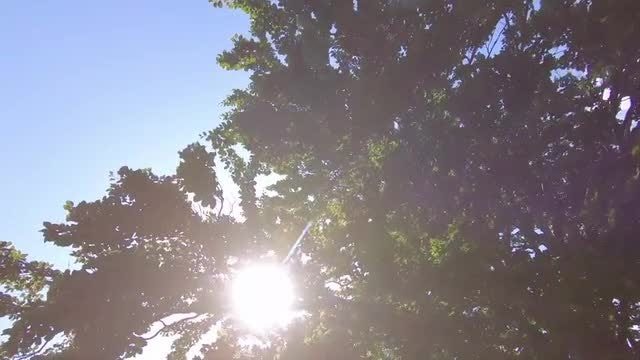 Low-angle Shot Of Green Trees: Stock Video