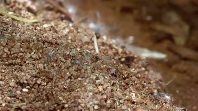 Ants Crawling On Wet Sand: Stock Video