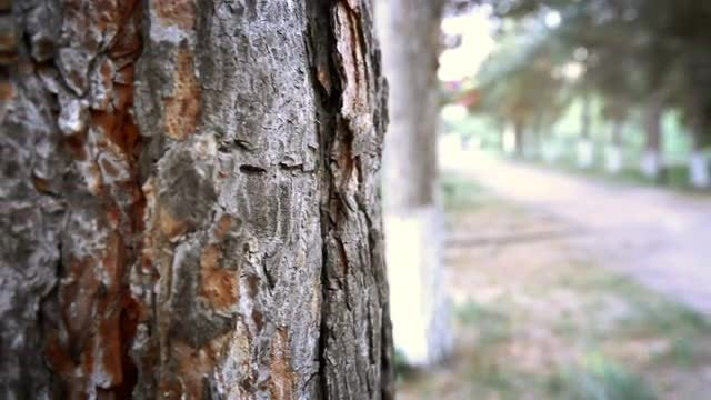 The Trunk Of A Tree: Stock Video