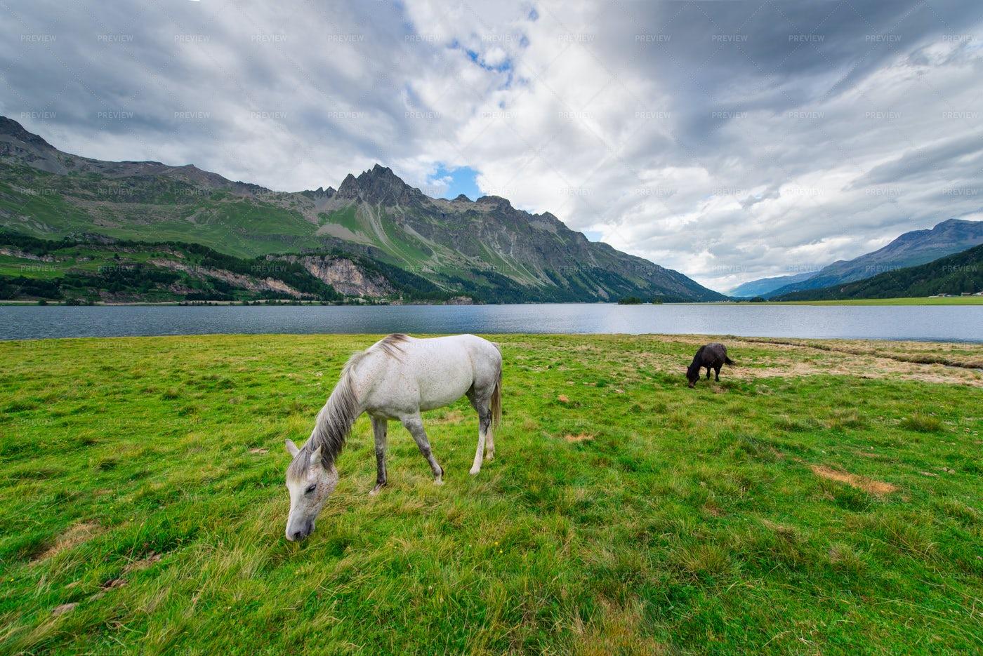 Horses Near A Lake In The Mountains: Stock Photos