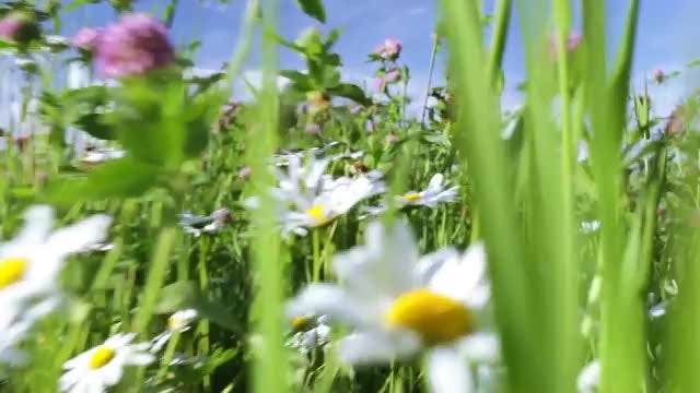 POV Shot Of Beautiful Meadow: Stock Video