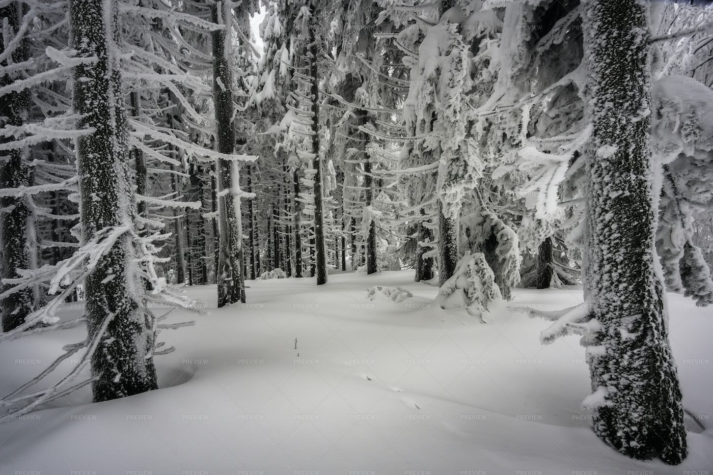 Winter Forest: Stock Photos