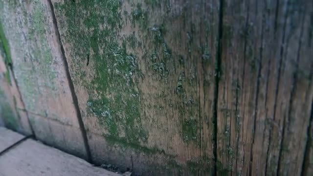 Old Wooden Fence With Paint: Stock Video