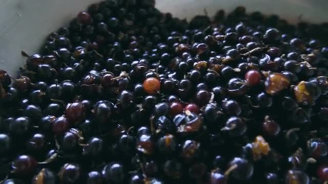 Blackcurrant Berries In Large Bowl: Stock Video