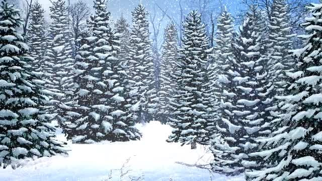 Snowy Trees Winter Background: Stock Motion Graphics