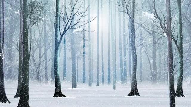 Snowy Winter Forest: Stock Motion Graphics