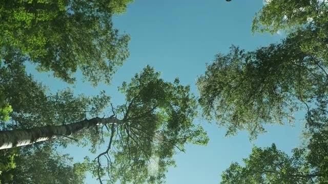 Beneath The Trees: Stock Video