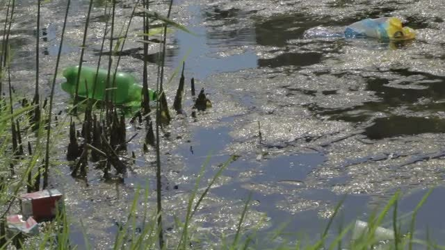 Pool Of Polluted Water : Stock Video