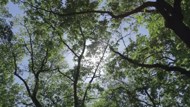 Low-angle Shot Of Trees: Stock Video