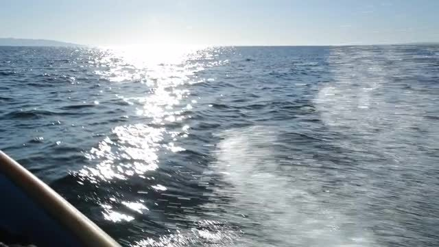 POV Boat Ride: Stock Video
