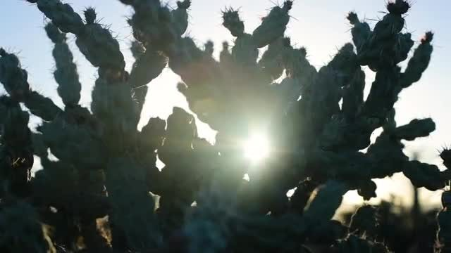 Cactus With Solar Lens Flare: Stock Video