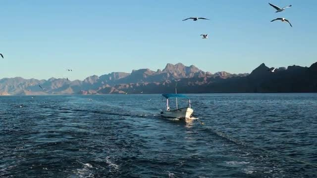 Boat Sailing And Birds Flying : Stock Video