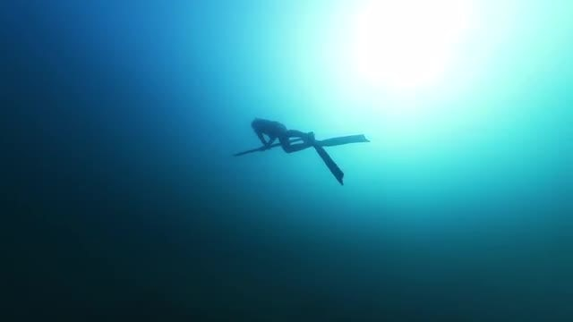 Free Diving Spear Fisherman : Stock Video