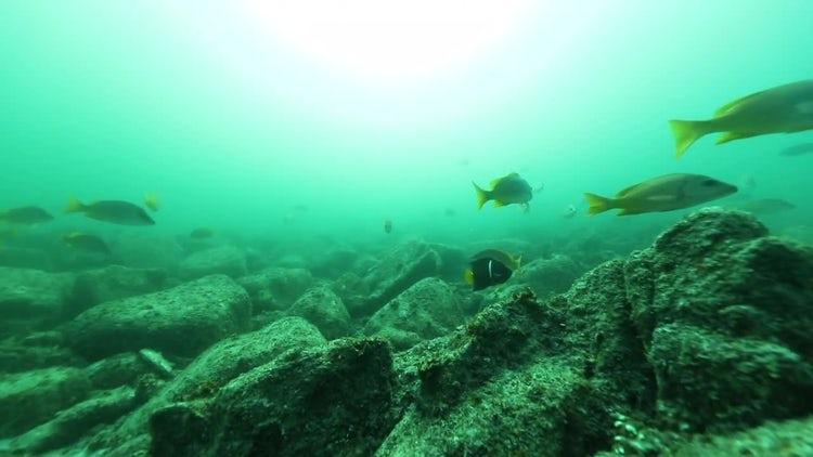 Tropical Fish On Ocean Floor : Stock Video