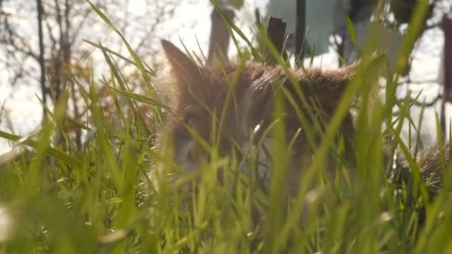 Cat In The Grass: Stock Video