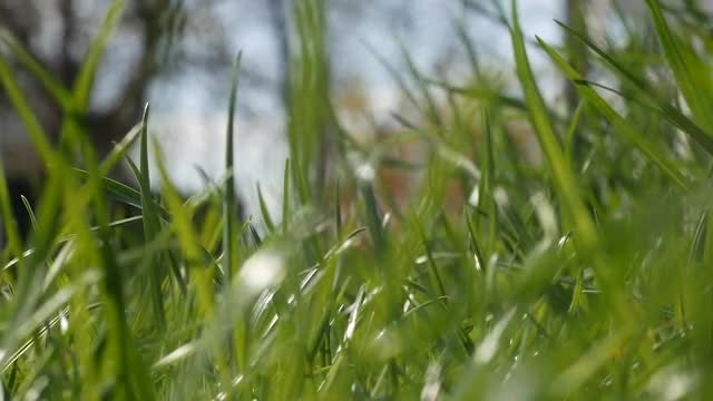 Green Grass: Stock Video