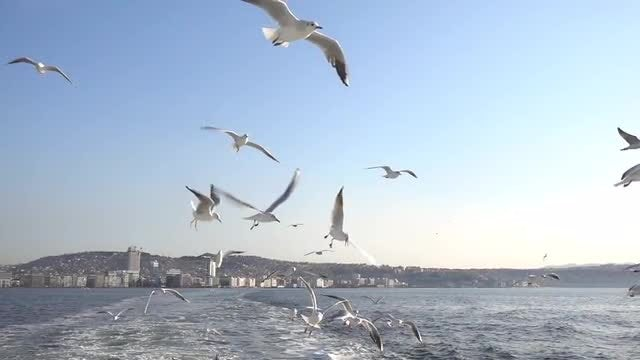 Seagulls And Seascape: Stock Video
