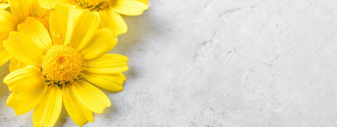 Yellow Flowers Background: Stock Photos