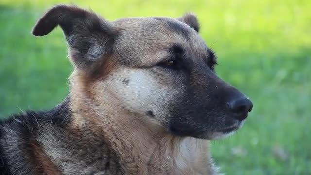 Cute Stray Dog: Stock Video