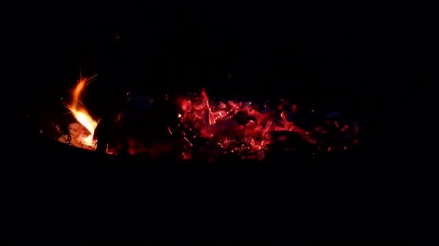 Stoking Campfire At Night: Stock Video