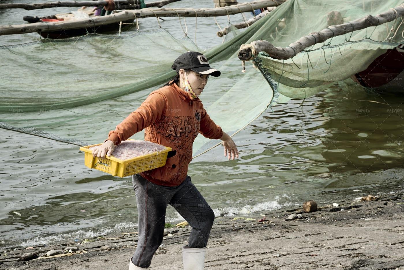 Vietnamese Woman Carrying Shrimp Catch: Stock Photos