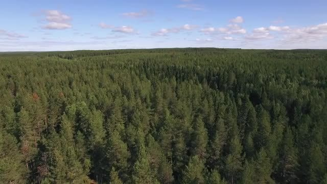 Flying Over Forest: Stock Video