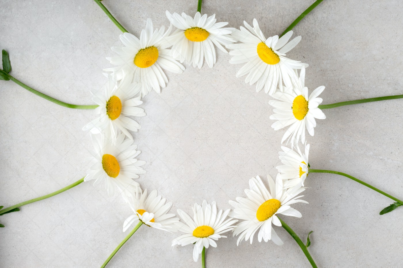 Frame With Lovely Camomiles: Stock Photos