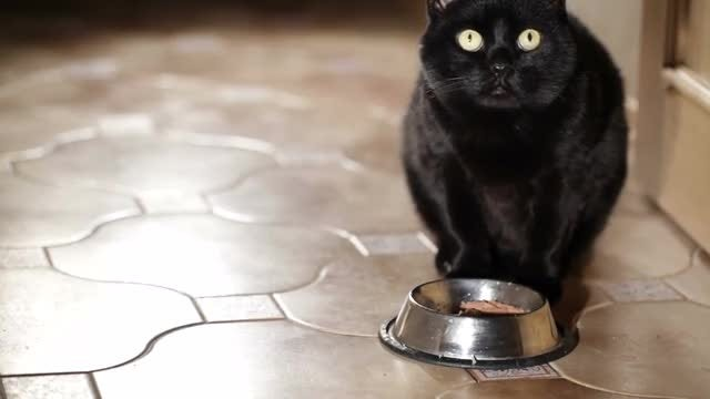 Black Cat: Stock Video