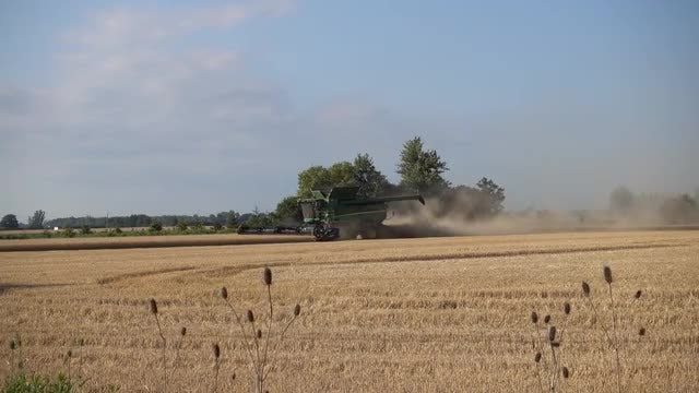 Wheat Harvester In Wheat Field: Stock Video