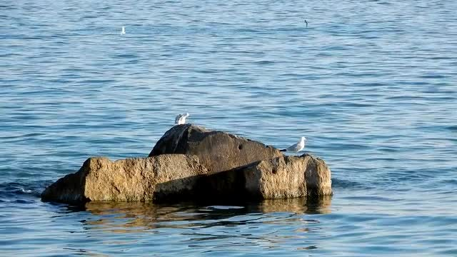Seagulls on Rock by Beach: Stock Video
