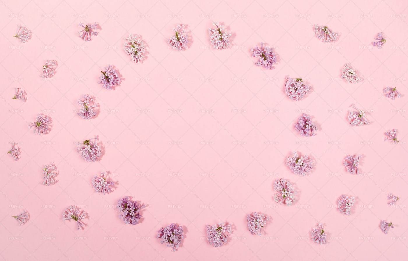 Pink Layout With Lilac Flowers: Stock Photos
