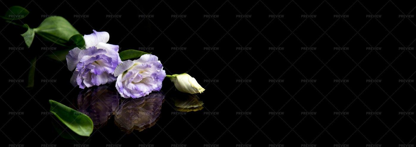 Purple Flowers On Black Background: Stock Photos
