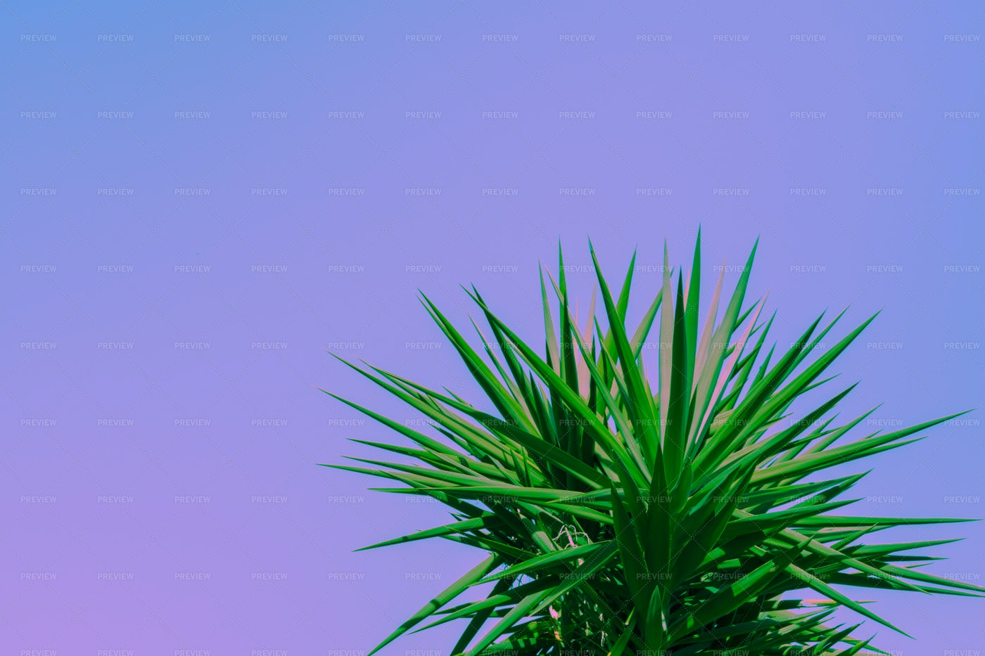 Purple Background With Palm: Stock Photos