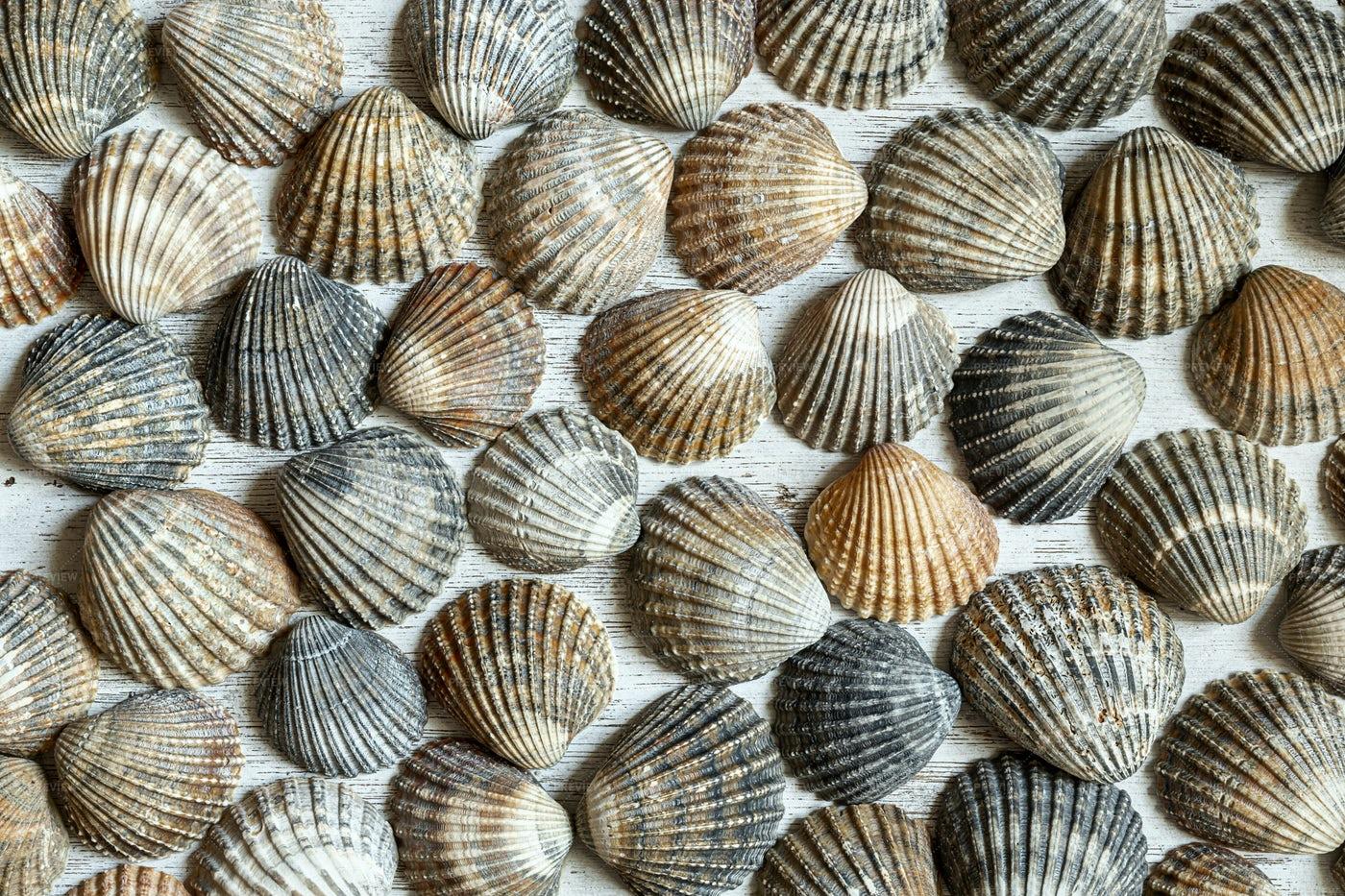 Seashells: Stock Photos