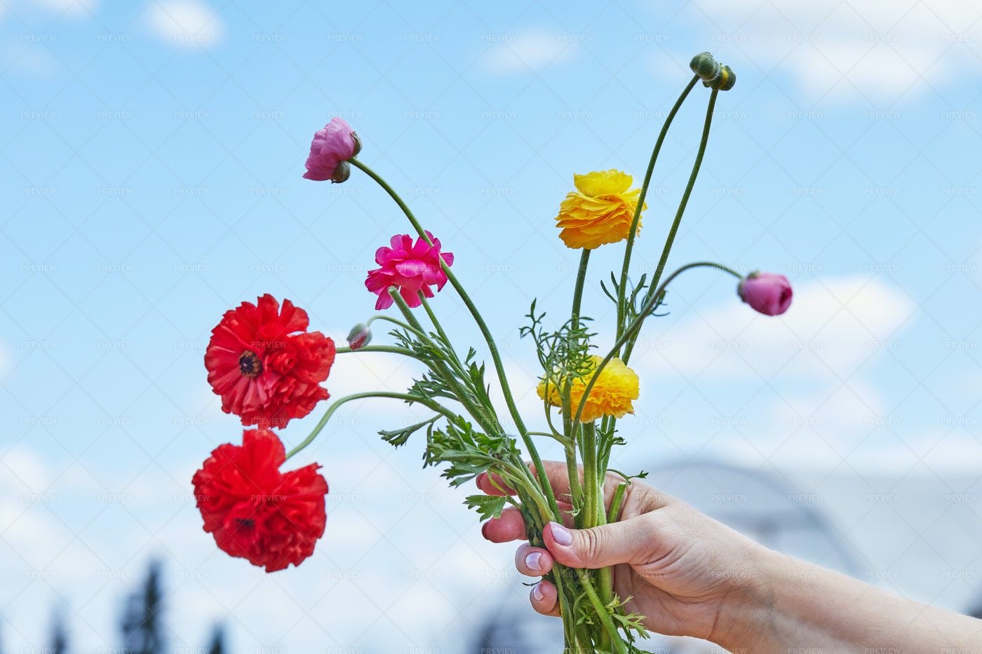 Woman's Hand Holding Bouquet: Stock Photos