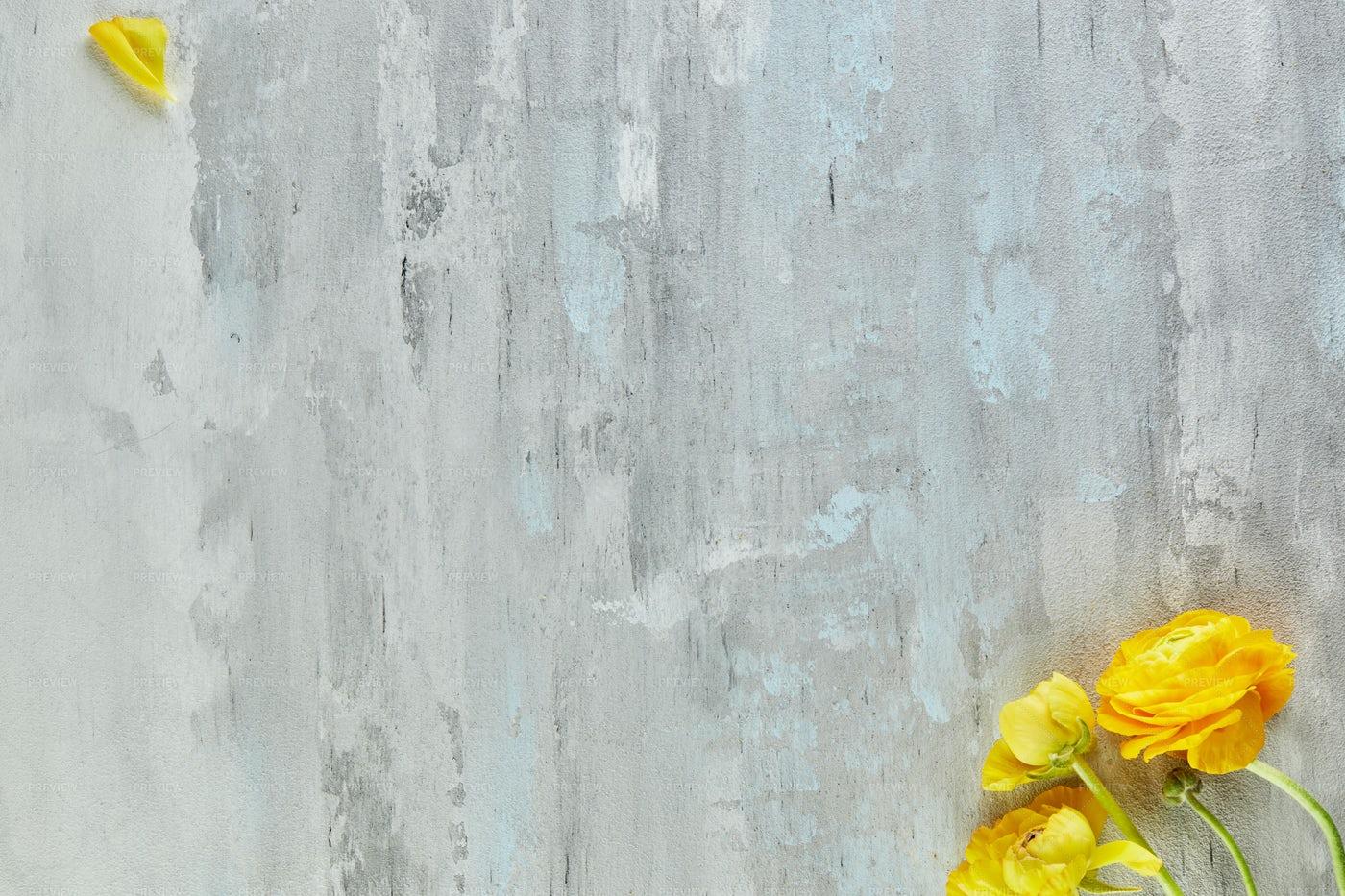 Yellow Flower On Grey: Stock Photos