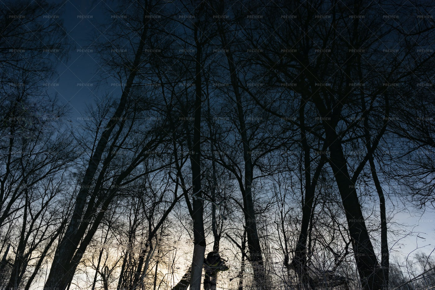 Reflections Of Dark Trees In Water: Stock Photos