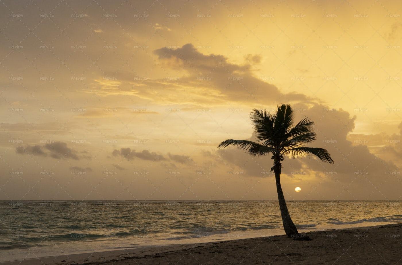 Coconut Palm At Sunrise: Stock Photos